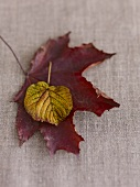 Autumn leaves on fabric