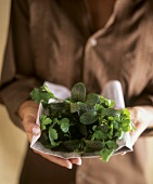 Hands holding mixed herbs on newspaper