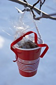 Red plastic cup containing pecan sweets hanging on branch