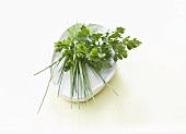 A bunch of herbs on a white plate