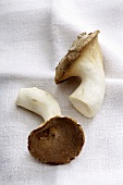 Two king oyster mushrooms