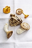 Various types of mushrooms on white cloth