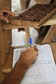 Noting the results of a quality test on cocoa beans
