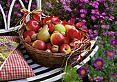 Basket of pears, apples and walnuts on a garden bench