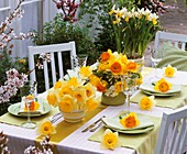 Table decoration with narcissi
