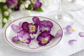 Horned violets in a plate filled with water