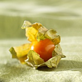 A Cape gooseberry with husk
