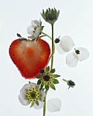 Strawberry with flowers
