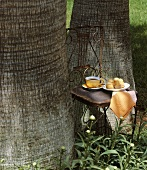 Tea and cakes on a chair by a tree trunk