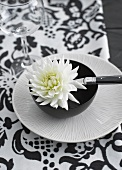 White chrysanthemum flower in black bowl