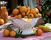 Tomatoes (variety: Orangino) in colander