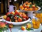 Nektarinen und Aprikosen in Schalen