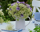 Chicory flowers and cow parsley in a jug