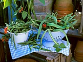 French beans in a bowl and runner beans in a colander