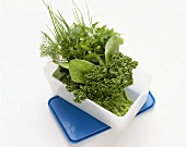 Fresh herbs in a food storage box