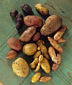 Various varieties of organic potatoes