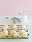 Madeleines sprinkled with icing sugar (small French cakes)