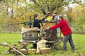 Geerntete Mostäpfel werden in historische Obstpresse gefüllt
