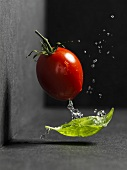 Plum tomato with basil and drops of water