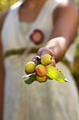 Hand holding crab apples
