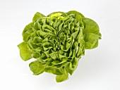 A lettuce (variety: Novita)