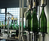 Wine bottles in a bottling plant