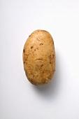 Aula, a floury potato