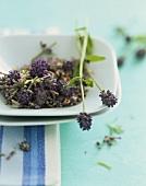 Lavendelblüten in einer Schale