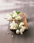 Mock orange (Philadelphus) in a dish