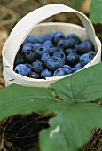 Fresh blueberries in woodchip basket