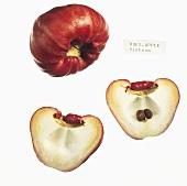 Rose apples (Vietnam)