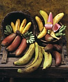 Various types of bananas