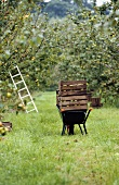 Crates of apples on a wheelbarrow