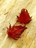Wild rosella (Australian species of Hibiscus)
