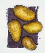 Potatoes, variety: Leyla