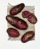 Potatoes, variety: Highland Burgundy Red