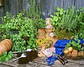 Repotting herbs