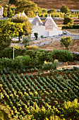Vineyard and trulli in the Itria valley near Martina Franca, Apulia