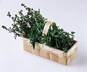 A basket of thyme and marjoram