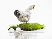 weiße Hühnereier und ein Huhn