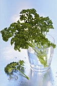 Parsley in a glass