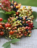 An autumnal wreath of berries with rosehips