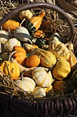 Various squashes in a wicker basket filled with straw