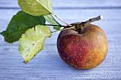 Boskop-Apfel mit Stiel und Blättern