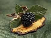 A blackberry with leaves on a piece of bark
