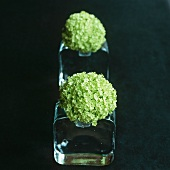 Green hortensia flowers in glass vases against a black background
