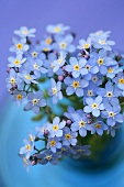 A posy of forget-me-nots in a vase