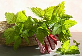 Fresh nettles in a basket with gardening gloves