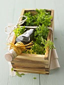 Basil vinegar in a wooden box to give as a gift