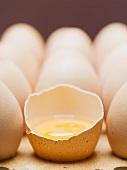 Frische braune Eier, eines aufgeschlagen